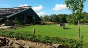 Op de Melktapperij in Haaksbergen zijn ze gestart met een mestproef van koemest